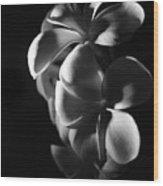 Night Flower Wood Print