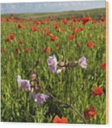 Night Flowering Catchfly And Poppies Wood Print