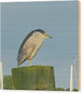 Night Heron At The Dock Wood Print