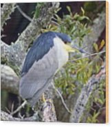 Night Heron Wood Print