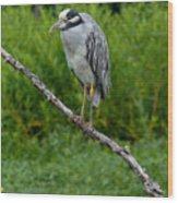 Night Heron On Slim Branch Wood Print