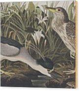 Night Heron Or Qua Bird Wood Print