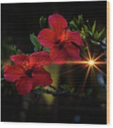 Night Hibiscus Wood Print