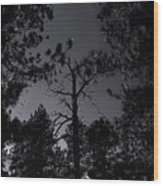 Night In The Druid Cathedral Wood Print