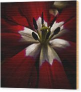 Night Lily One Wood Print