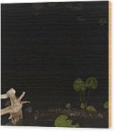 Night Magic Wood Print