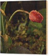 Night Tulip II Wood Print