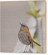 Nightingale Wood Print