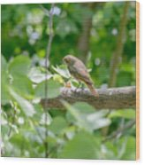 Nightingale In The Wood Wood Print