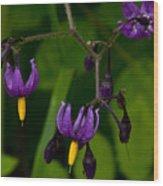 Nightshade Wildflowers #5633 Wood Print