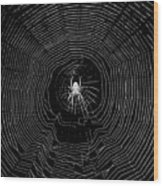 Nighttime Spider And Web Wood Print
