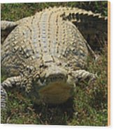 Nile Crocodile - Africa Wood Print