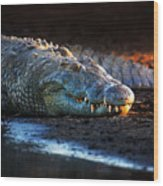Nile Crocodile On Riverbank-1 Wood Print