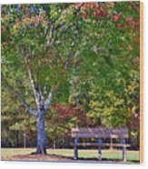 Ninety Six National Historic Site Bench In Autumn  Wood Print