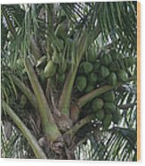 Niu Ola Hiki Coconut Palm Wood Print