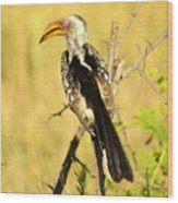 Nkorho Wood Print