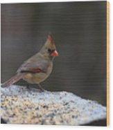 Natures Birds 53 Wood Print