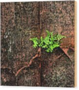 No Barriers To Growth Wood Print