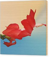 No Fear Of Flying Wood Print