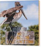 No Fishing Baby Pelican Wood Print