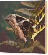 Nocturnal Moth Wood Print