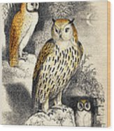 Nocturnal Scene With Three Owls Wood Print