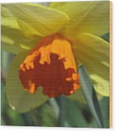 Nodding Daffodil Wood Print