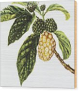 Noni Fruit Art Wood Print