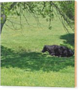 Noon Siesta Wood Print by Jan Amiss Photography