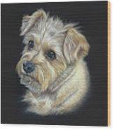 Norfolk Terrier 'hattie' Wood Print