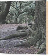 Norfolk Trees Wood Print
