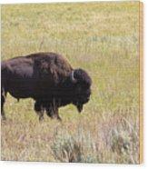 North American Bison- Buffalo In Field  Wood Print