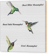 North American Hummingbirds Wood Print