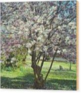 North American Magnolia Tree Wood Print