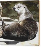 North American River Otter Wood Print