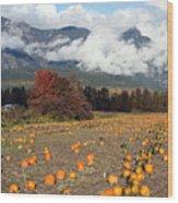 North Arm Farm Pumpkin Season Pemberton B.c Canada Wood Print