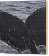 North Atlantic Humpback Wood Print