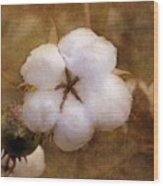 North Carolina Cotton Boll Wood Print
