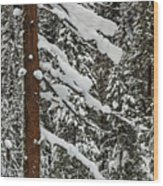 North Cascades Forest Wood Print