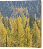 North Idaho Gold Wood Print