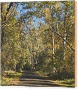 North Park Drive Wood Print