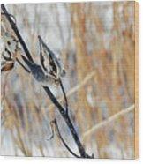 North Pond Prairie Grass Wood Print