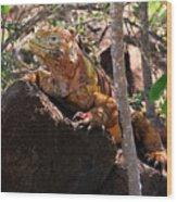 North Seymour Island Iguana In The Galapagos Islands Wood Print
