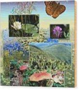 Northern Appalachian Summer Wood Print