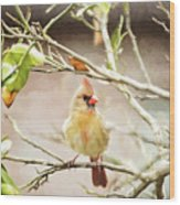 Northern Cardinal Female - Digital Painting Wood Print