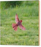 Northern Cardinal In Flight Wood Print