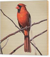 Northern Cardinal Profile Wood Print