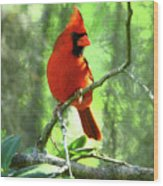 Northern Cardinal Proud Bird Wood Print