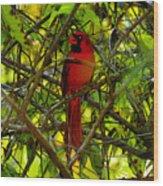 Northern Cardinal Work Number Two Wood Print