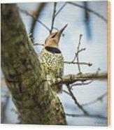 Northern Flicker - Woodpecker Wood Print